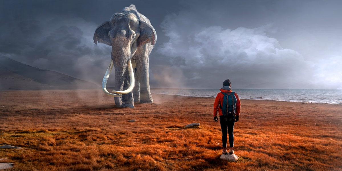 Слоны внутри нас
